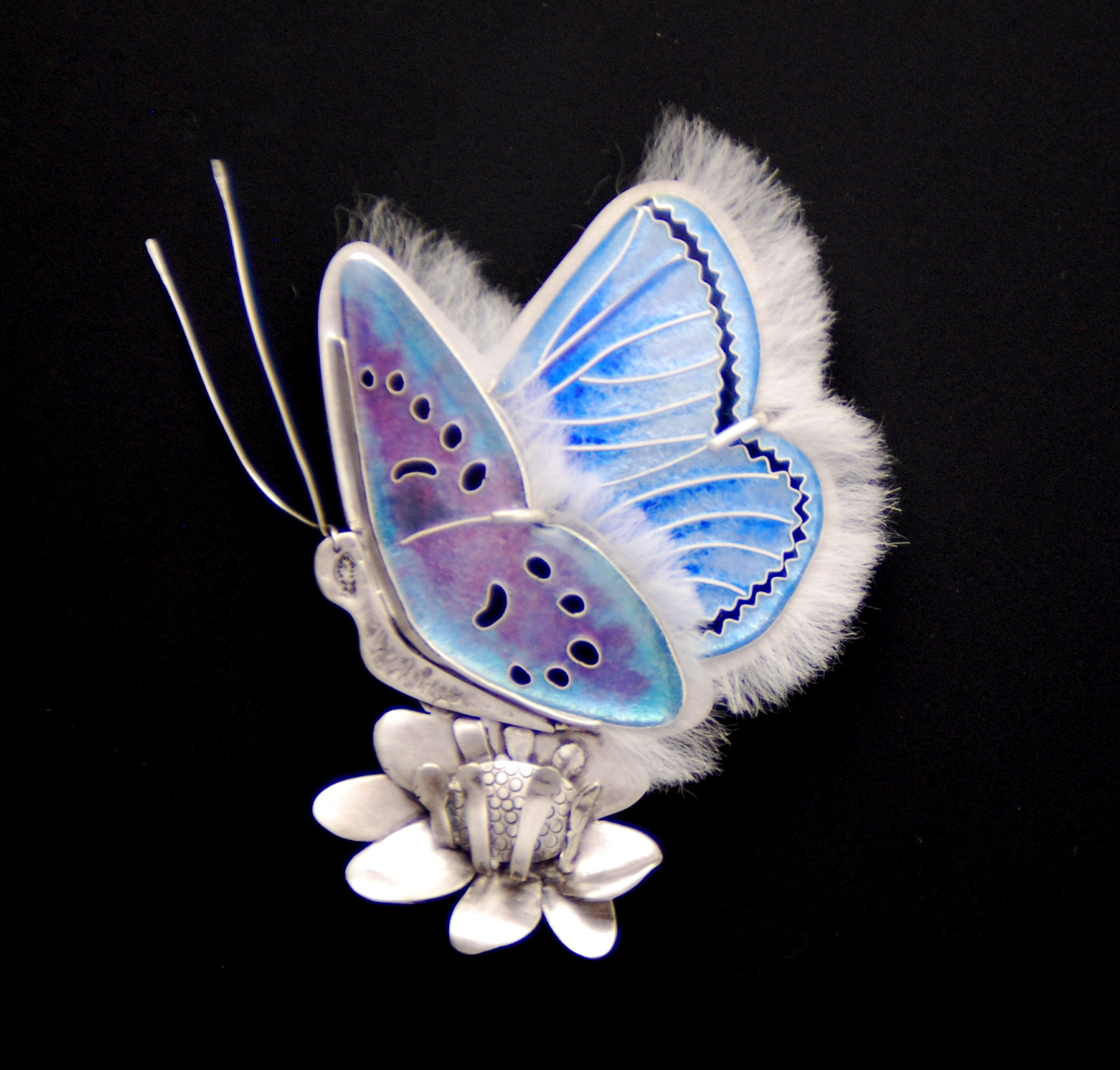 Mission Blue Butterfly - front view