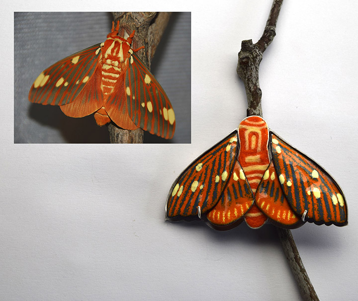 Regal Moth